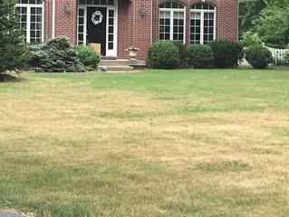 Scalped Lawns