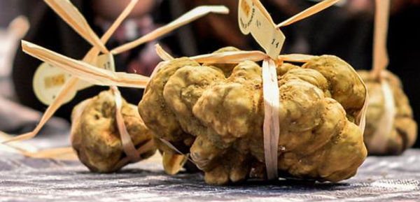 Alba-truffle-©Davide-Carletti-Ente-Fiera