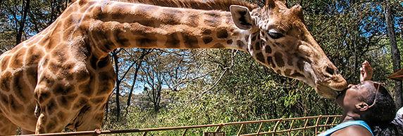 GiraffeKiss.jpg