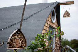 Bee B&B and shed