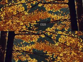 coze [2017]