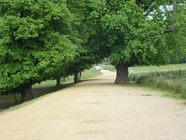 richmond-park-661652_1920.jpg