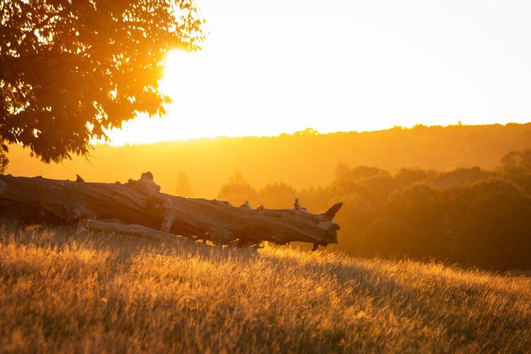sunrise-4089041_1920.jpg