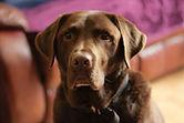 Hooper the office dog