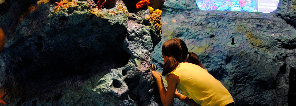 Fernbank Museum of Natural History NatureQuest Coral Reef