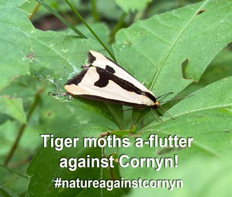 Tiger Moths against.jpg