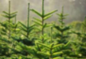Weihnachtsbaum2011_2.jpg