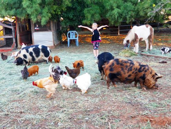 Paisley's Pasture Pigs