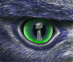 Seahawks Eye on the Prize