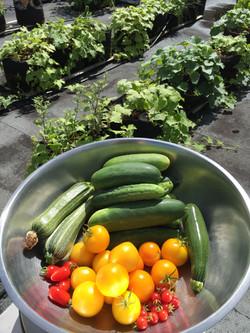 Une des nombreuses récoltes colorées