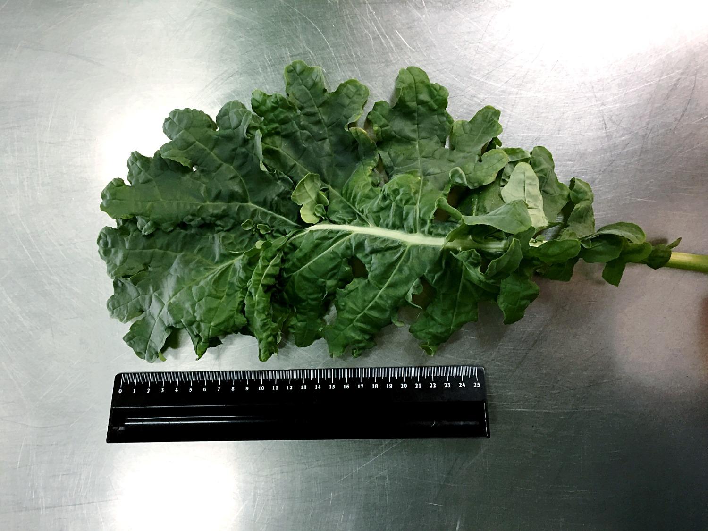 Feuille de kale