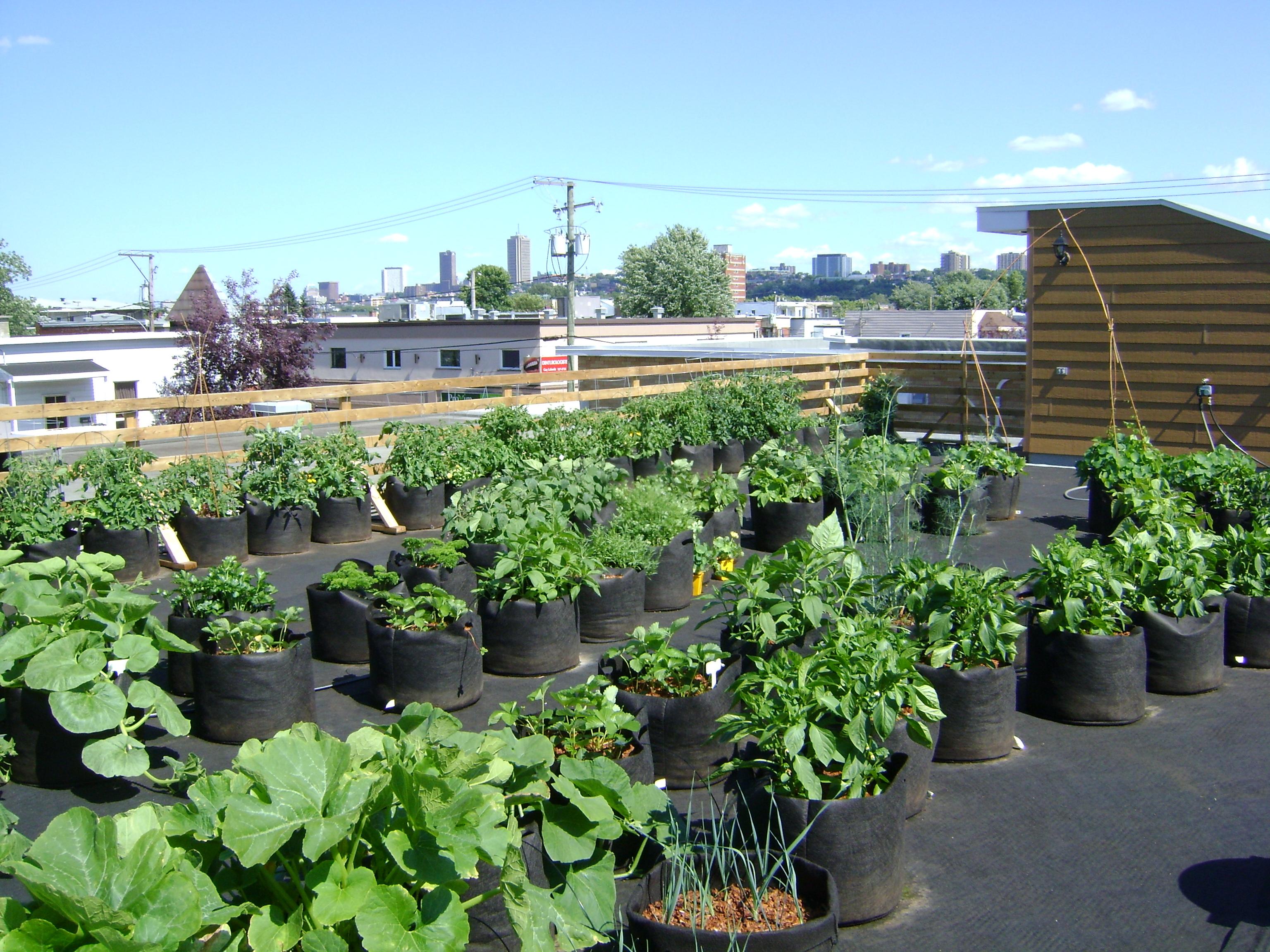Toit jardin et vue de Québec