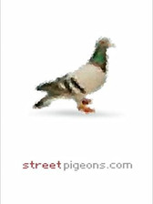 Streetpigeons