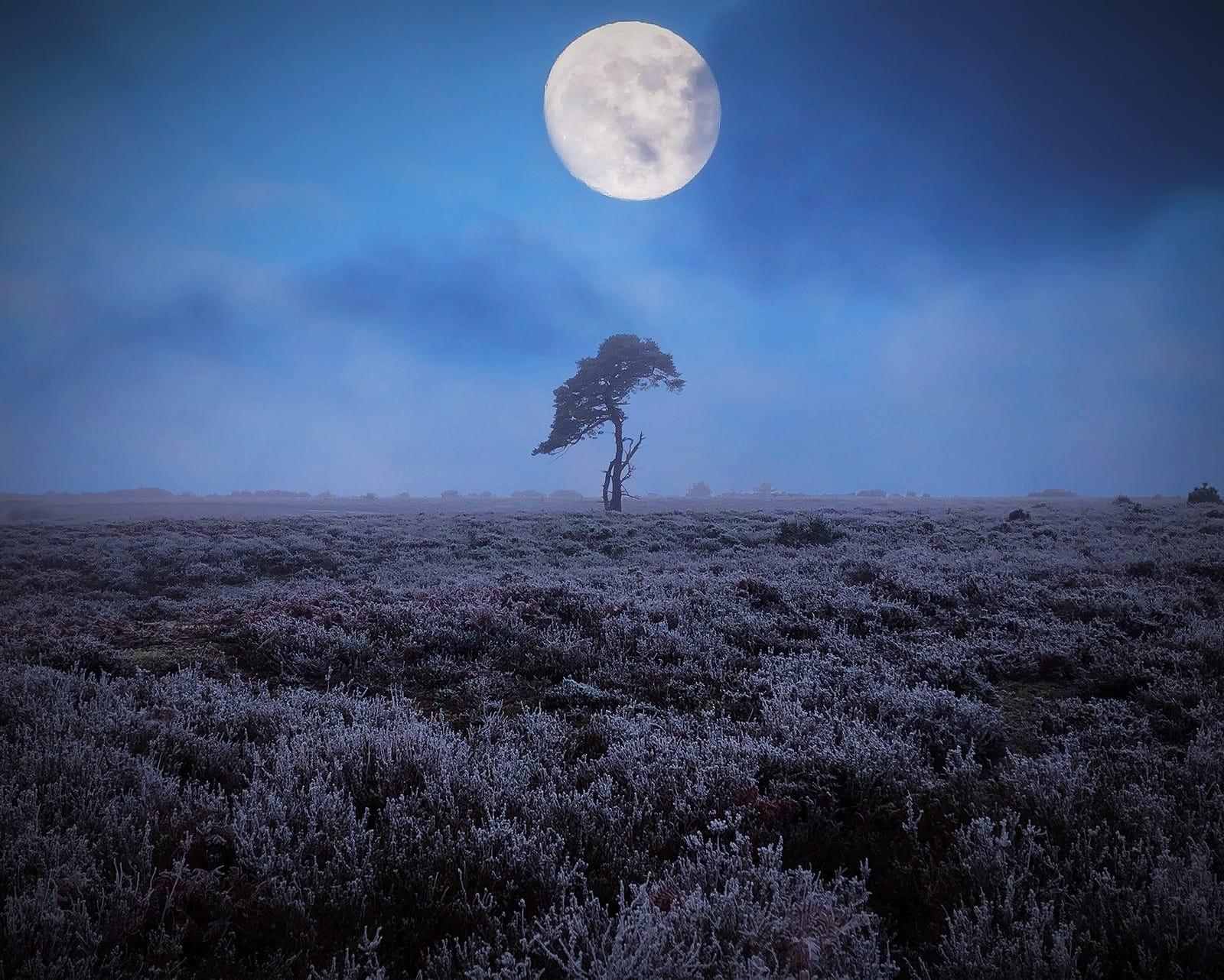 Soulful Tree Yoga Retreat Weekend