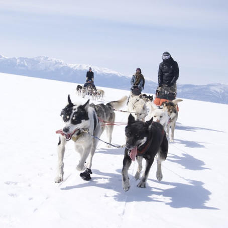 Mongolia and how people should be more like dogs