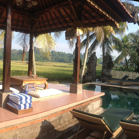 High on wheatgrass in Ubud, Bali