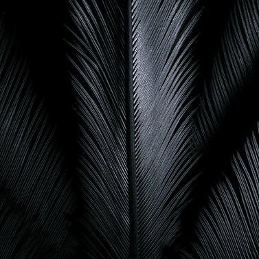 pexels-takeshi-arai-4107337.jpg