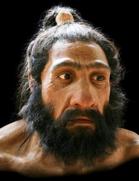 homo neanderthalensis.png