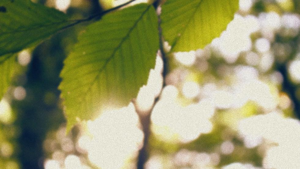Image5_edited_edited.jpg