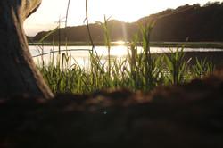 'through the grass'