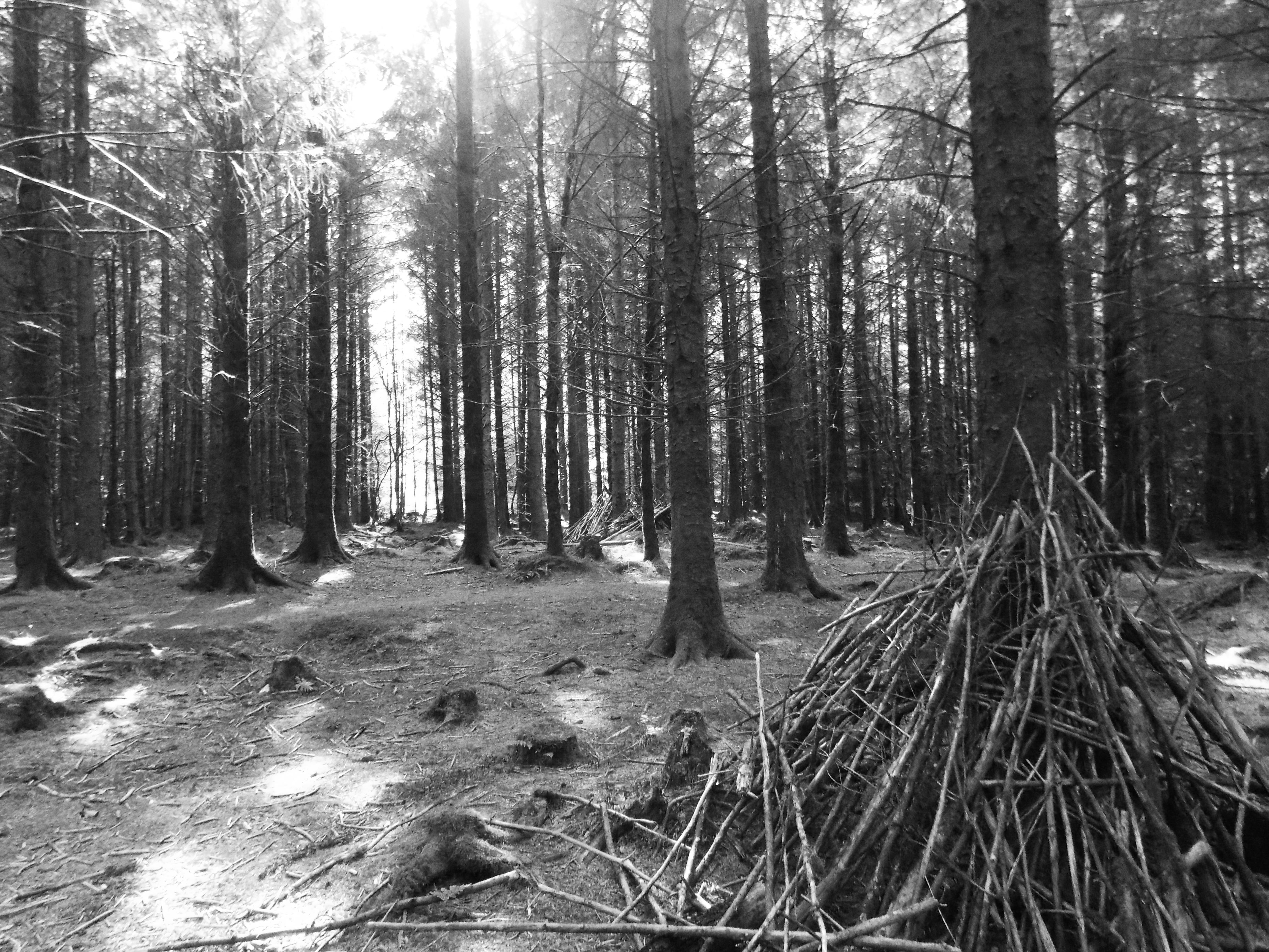 'woods'