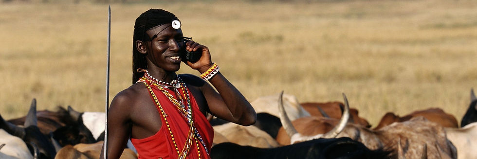 Maasai moran / warrior in red Ochre tunic of a mobile telephone with cattle stand round him, in grassland bush.