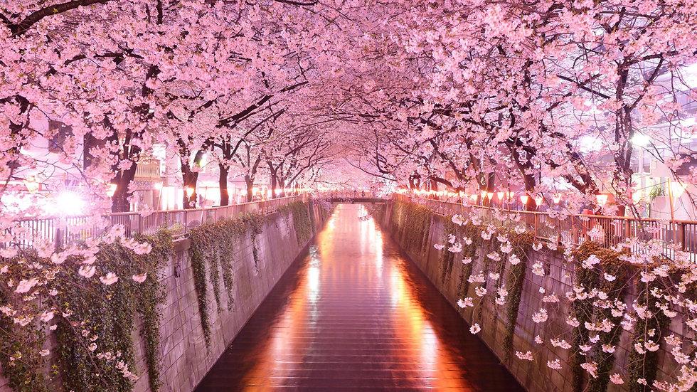Tour del Giappone - 12 notti - Aprile / Maggio 2020