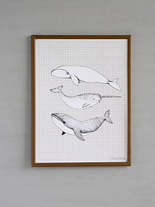 הדפס חיות מים