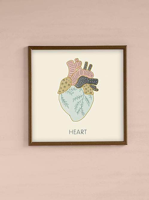 איור אנטומי- לב