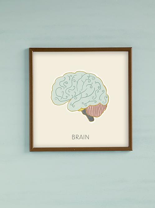 איור אנטומי- מוח