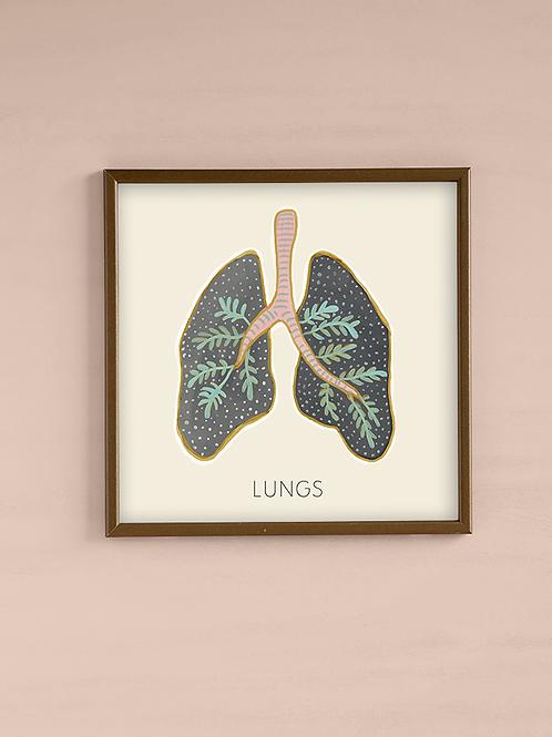 איור אנטומי-ריאות