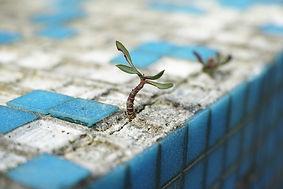 plant-2318936_1920.jpg