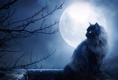 cat IN moon copy copy.jpg