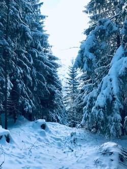 Schneeschuhwanderung auf den Hirschberg