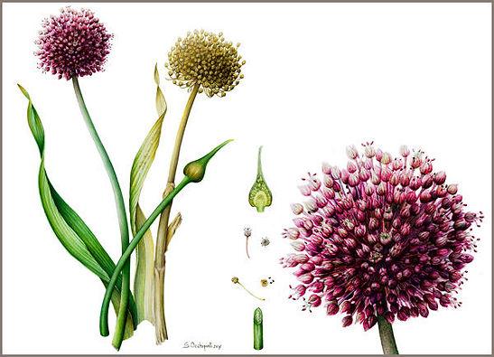 tav-botanica-2-600x433.jpg