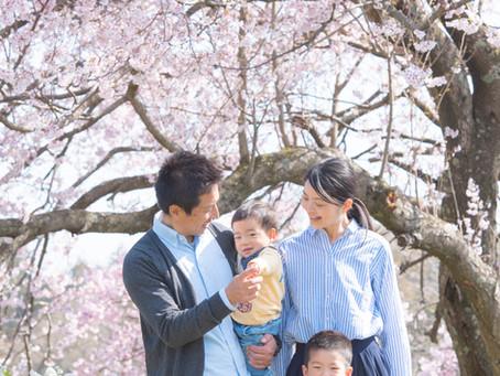 WARAU BLOG (桜の木の下で)