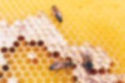 Nid abeilles2.jpg