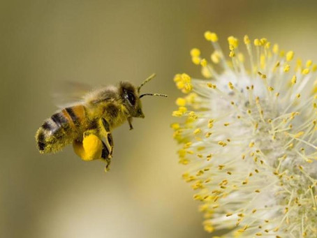 A new definition for worker bees