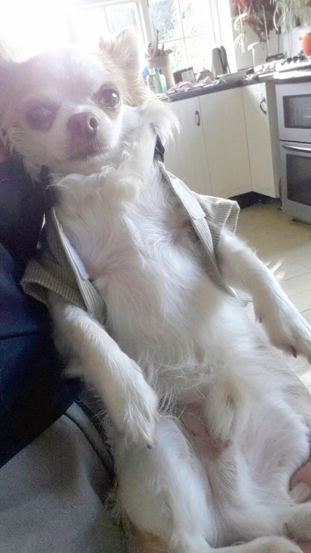 Rafa Capri, Dog Model