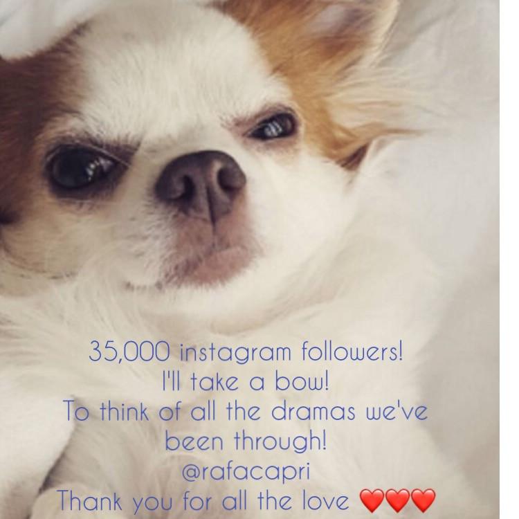 Rafa Capri, Dog model, Instagram