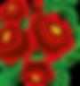 fiori ricamati