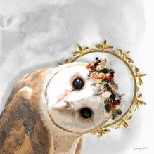 Princess Protector Barn Owl