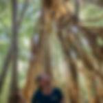Rainforest Waterfalls_2.jpg