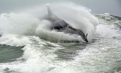 Barracuda II surfing 2