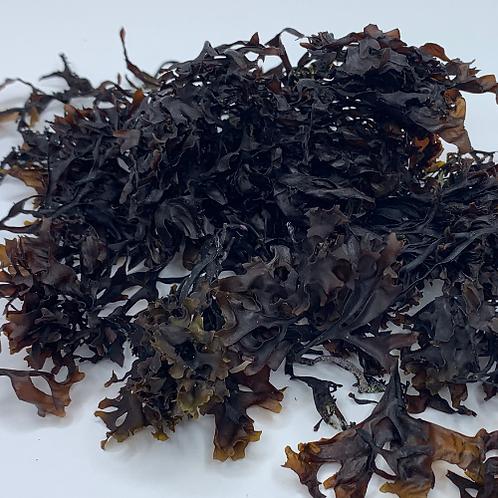 Wildcrafted Raw Irish Sea Moss (Chondrus Crispus)