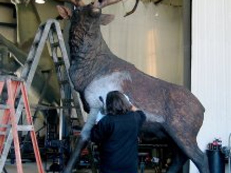 "THE MAKING OF ""HIGH DESERT ELK"" – Part 7"