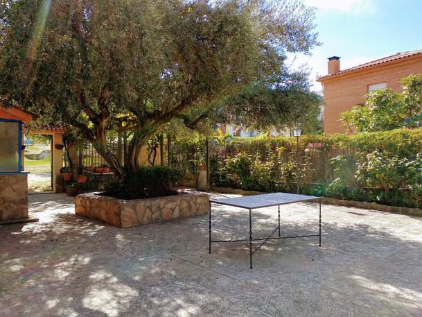 Jardín con olivo