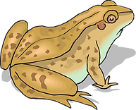 kisspng-frog-and-toad-amphibian-clip-art