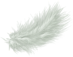 kisspng-feather-drawing-clip-art-5aea5f4