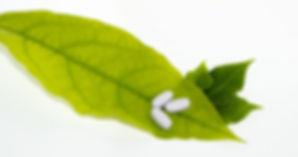 leaf-681122_1920.jpg